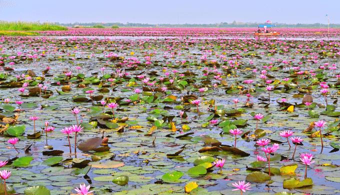 ピンクの絶景!蓮の湖「タレーブアデーン」とは?